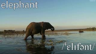 British English Pronunciation of African Animals - Learn English