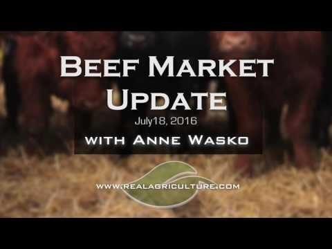 Beef Market Update: Feedlot Losses Signaling Cautious Fall Sales