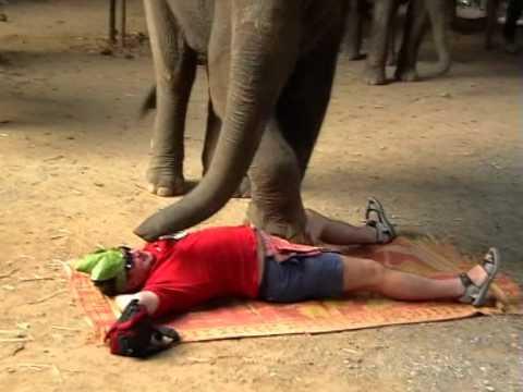 Таиланд ! Слоны мутят массаж )))