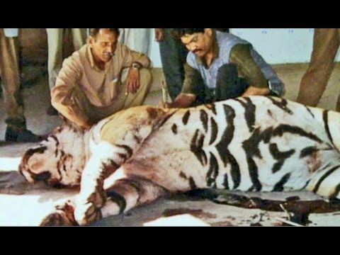 Dressed to live - Wildlife Styles (full documentary)
