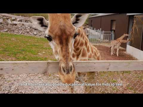 Safari Zoo: Over 1500 Different Animals