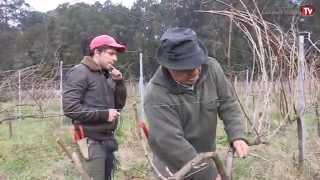 A Lusopress foi ao Norte de Portugal acompanha a poda da vinha