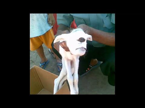 Fotos de Animales deformes   奇形動物たちの写真 環境汚染・放射能