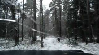 Uaz Patriot driving through winter forest.