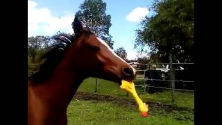 Horse with rubber chicken