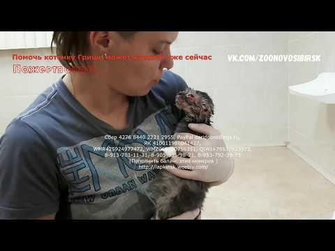 Спасение котёнка без кожи  найденного детьми на мусорке в Новосибирске | Kitten in trouble