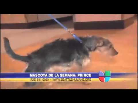 Mascota de la semana: Prince
