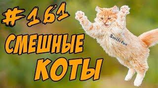 Смешные Кошки и Коты 2018 - Приколы С Котами - Funny Cats