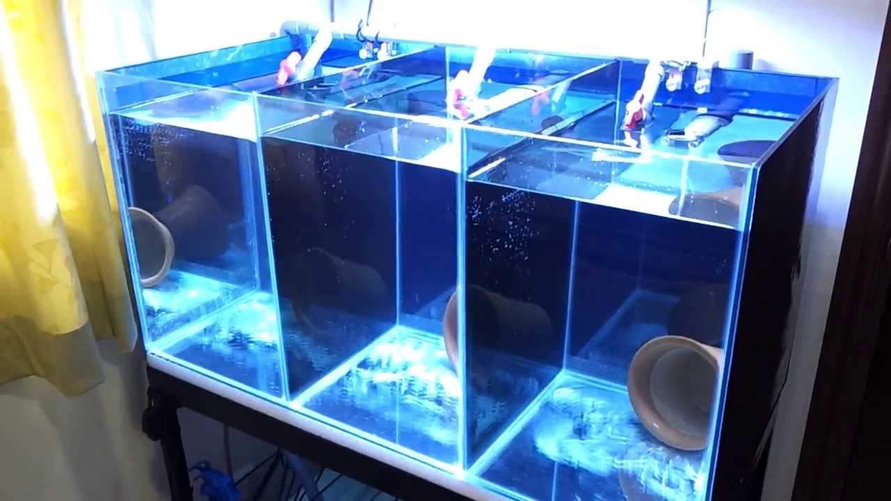Clownfish breeding tank setup youtube for Fish breeding tank