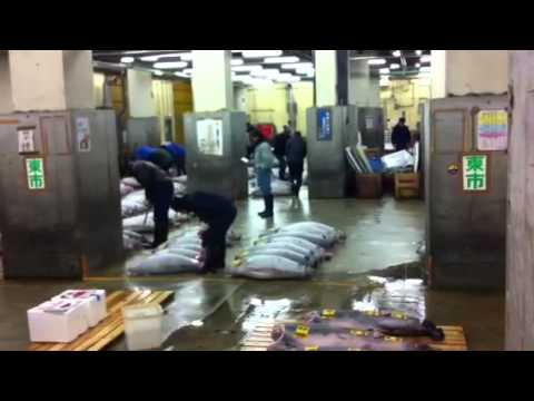 Tokyo Tsukiji Fish Market, Preparation for the Tuna Auction