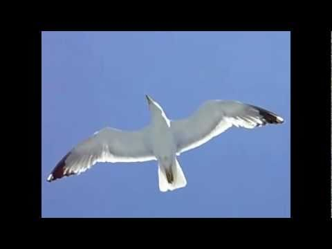 Bad Company - Seagull