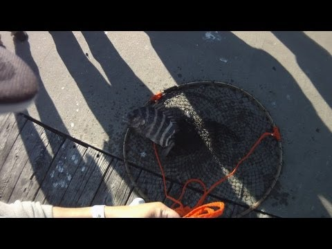 [Pier Fishing] Sheepshead fishing at Okaloosa Island Fishing Pier