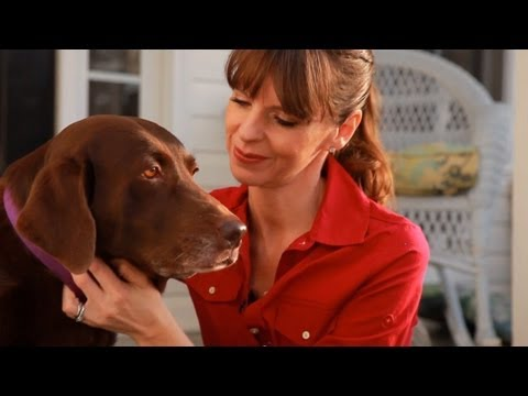 0 Dog Training With Positive Reinforcement | Teachers Pet With Victoria Stilwell