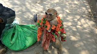 Bandar Bandariya ka Khel Short Version | Funny Monkey Dance Video