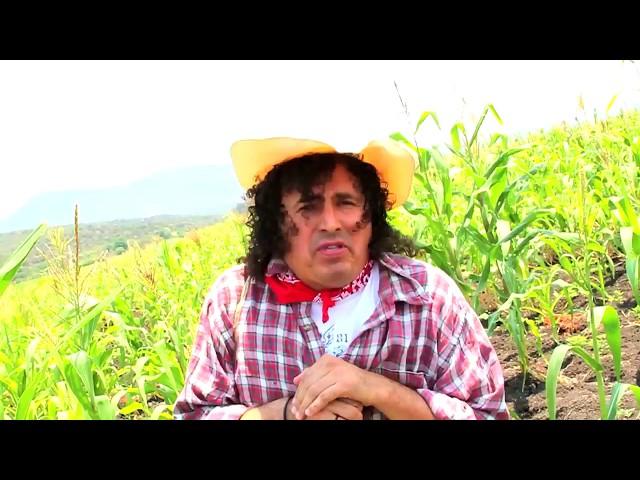 La Pitacocha Pantera Musical - San Ciro de Acosta