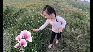 Bé Ớt Ra Cánh Đồng Hái Hoa và Cho Bò Ăn Cỏ   Go Out To The Field To Pick Flowers