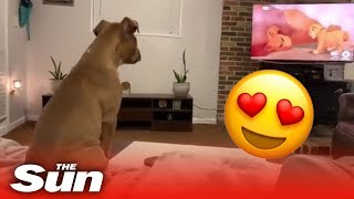Adorable dog reacts in the cutest way to Lion King's saddest scene