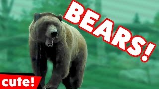 Funniest Bears Are Awesome Video Compilation November 2016   Kyoot Animals