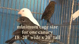 Meet Canary Breeder Jorge Garcia