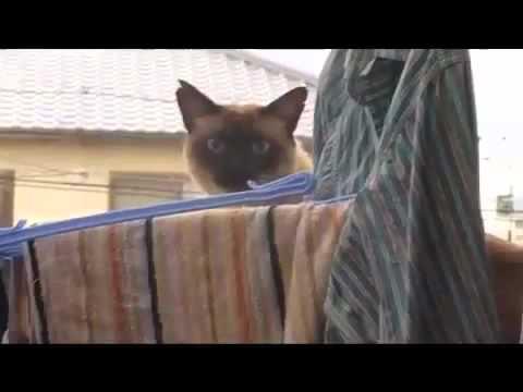Epic Cat Jump Fail Sail Version Youtube