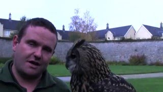 All About Owls in Adare Ireland  With Odus