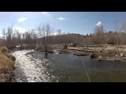 Dry fly fishing on rock creek mt spring 2012 youtube for Rock creek montana fishing report
