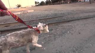 Cão abandonado em lixeira faz algo incrível