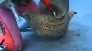 ปลาไหลมอเรย์เป็นสัตว์ที่น่ารัก