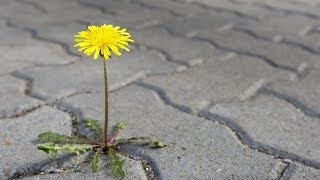 Shell Busey's OmBuseyMan Blog - Homemade Weed Killer