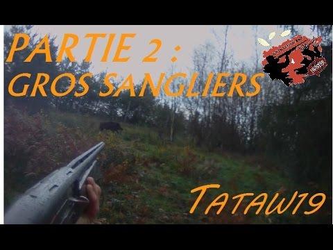 Partie 2 - Chasse Aux Sangliers 2015-2016 Avec GROS Sangliers