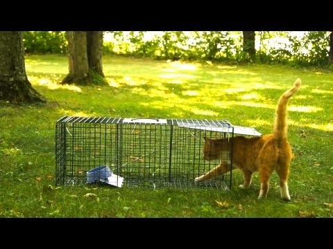 Advantek Live Trap for Cat. Raccoon. Opossum. and Armadillo Value Pack Test