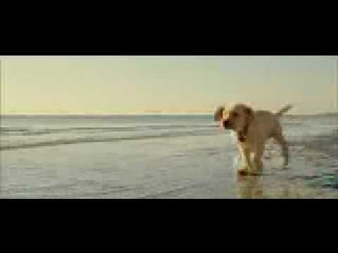marley and me the dog. Marley and Me Teaser Trailer