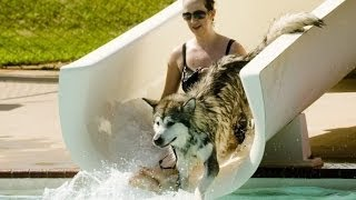 Funny Dogs on Water Slides Compilation 2014
