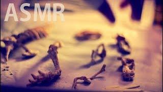 "[ASMR] T-Rex Excavation : Episode #3 ""The Dig-Scrap-Brush Rule"" - No Talking"