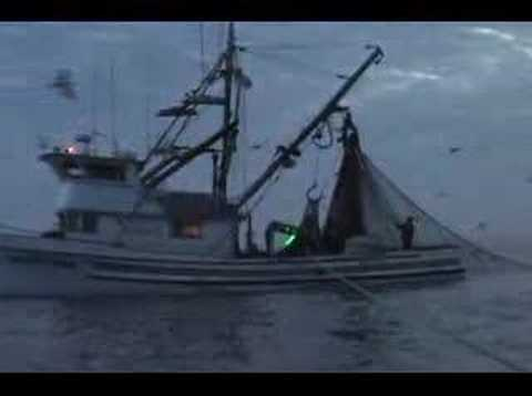"Commercia Squid Fishing  ""Come Sail Away"""