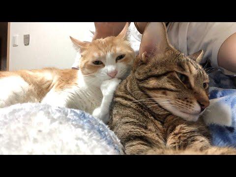 猫が仲良く寝ていたので仲間に入りたい