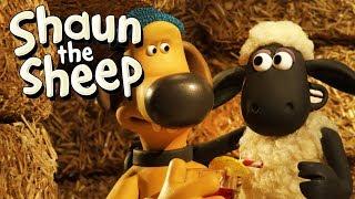 Perang Perebutan Wilayah [Turf Wars]   Shaun the Sheep   Full Episode   Funny Cartoons For Kids