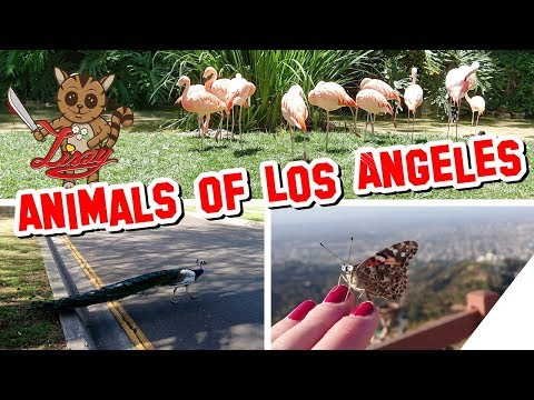 CUTE ANIMALS of LOS ANGELES ! Compilation [Süße Tiere] Liszy's Los Angeles Reise