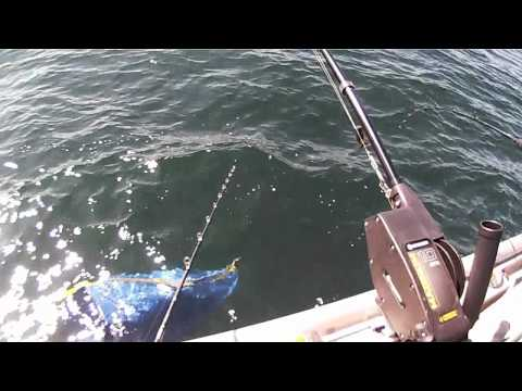 Jigging Brown Trout & Salmon on Lake Ontario