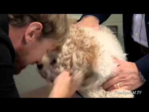 Kian Egan - Fat Pets *Slimmer Of The Year* [EP1. 2015]