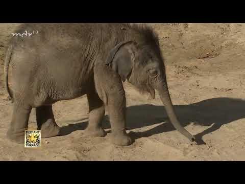 Treffen der Leipziger Elefantenjungs