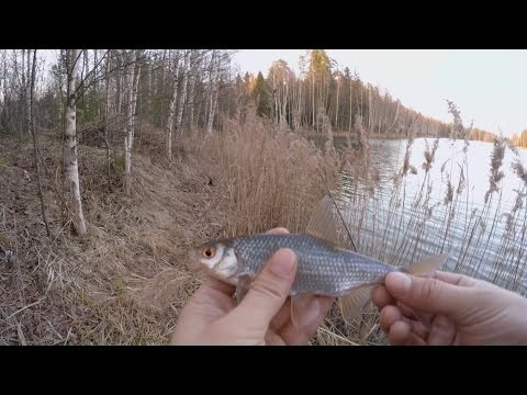 рыбалка на летний боковой кивок видео