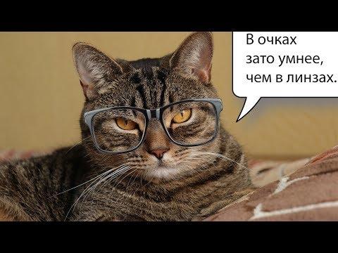 Контактные линзы или очки, что лучше? Личный опыт