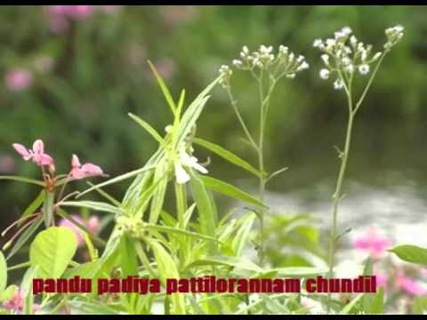 Pandu Padiya Paattilorennam video
