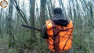 Tir De Sanglier En Battue Toute La Saison 2014/15 Beaten To The Wild Boar And The Shooting