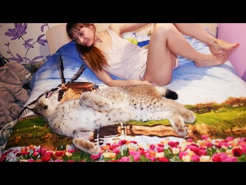 ЖИЗНЬ С РЫСЬЮ И БЕЗ РЫСИ / Life with and without a big cat
