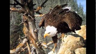 a águia mensagem reflexão