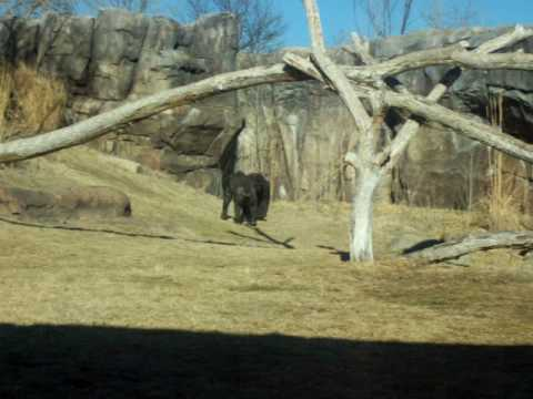 at the Sedgwick County Zoo