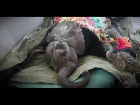 Baby Elephant Rescued from well in Kenya BBC News