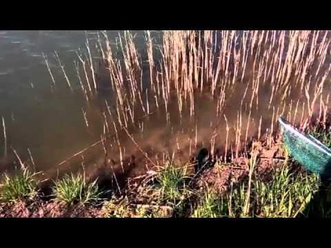печенеги рыбхоз рыбалка на щуку